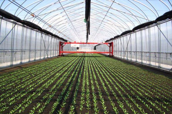 十勝清水美乃里農場でほうれん草を栽培しています